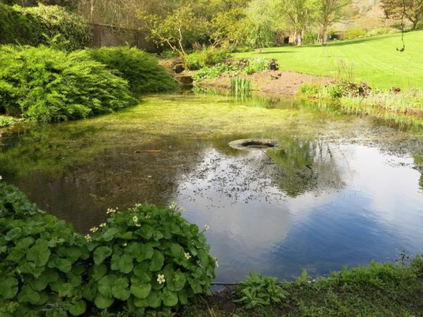 Photo of the pond in the Walled Garden