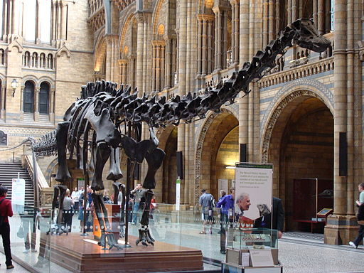 Photo of Dippy in the Natural History Museum
