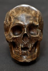 Photo of a cast of the Skull of King Robert the Bruce